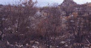 Δάσος που καίγεται ολοσχερώς από μια δασική πυρκαγιά φιλμ μικρού μήκους