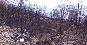 Δάσος που καίγεται ολοσχερώς από μια δασική πυρκαγιά απόθεμα βίντεο