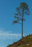 Δάσος που κόβεται και που καίγεται για να φυτεψει τις συγκομιδές. Στοκ φωτογραφίες με δικαίωμα ελεύθερης χρήσης