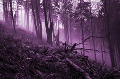 Δάσος που συχνάζεται απόκοσμο Στοκ Φωτογραφίες