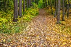 Δάσος πράσινος-κίτρινος-κοκκίνου φθινοπώρου Στοκ Φωτογραφία
