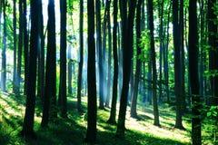 δάσος πράσινο στοκ εικόνες με δικαίωμα ελεύθερης χρήσης