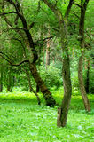 δάσος πράσινο Στοκ φωτογραφίες με δικαίωμα ελεύθερης χρήσης