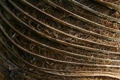 δάσος προτύπων Στοκ Φωτογραφίες