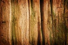 δάσος προτύπων Στοκ Εικόνα
