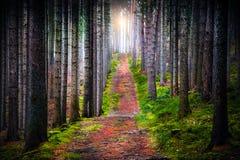 Δάσος πρωινού στοκ φωτογραφίες