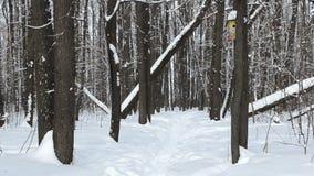 Δάσος πρωινού φιλμ μικρού μήκους