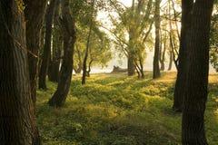 δάσος πρωινό Στοκ Εικόνες