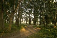 δάσος πρωινό Στοκ εικόνες με δικαίωμα ελεύθερης χρήσης