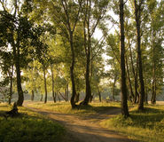 δάσος πρωινό Στοκ Φωτογραφία