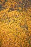 δάσος πτώσης κίτρινο Στοκ Εικόνες