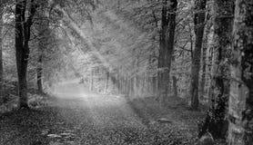 Δάσος πτώσης με τις ακτίνες ήλιων Στοκ Εικόνες