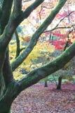 δάσος πτώσης φθινοπώρου Στοκ φωτογραφία με δικαίωμα ελεύθερης χρήσης