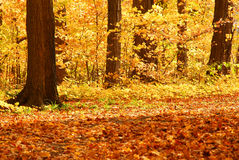 δάσος πτώσης στοκ εικόνα