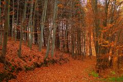 δάσος πτώσης Στοκ Φωτογραφίες