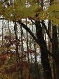 Δάσος πτώσης Στοκ Εικόνες