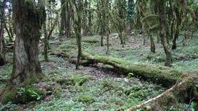 Δάσος πυξαριού στο Sochi στοκ εικόνες με δικαίωμα ελεύθερης χρήσης