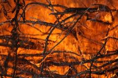 δάσος πυρκαγιάς Στοκ Φωτογραφία