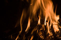 δάσος πυρκαγιάς Στοκ Φωτογραφίες