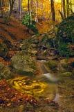 δάσος ρευμάτων φθινοπώρου Στοκ φωτογραφίες με δικαίωμα ελεύθερης χρήσης