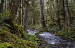 Δάσος & ρεύμα στοκ φωτογραφία με δικαίωμα ελεύθερης χρήσης