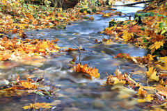 δάσος ρυακιών φθινοπώρο&upsilo στοκ φωτογραφίες