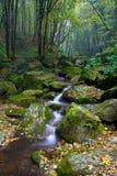 δάσος ρυακιών Στοκ εικόνα με δικαίωμα ελεύθερης χρήσης