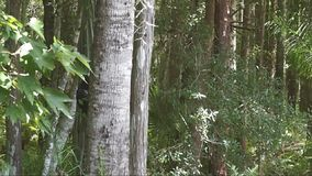 Δάσος σε ένα αεράκι απόθεμα βίντεο