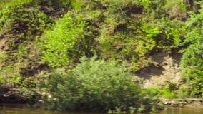 Δάσος σε μια ακτή ενός πυροβολισμού λιμνών από μια κινούμενη βάρκα φιλμ μικρού μήκους