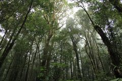Δάσος σε Chaingmai, Ταϊλάνδη Στοκ Εικόνα