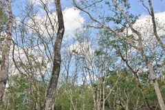 Δάσος σε Chichen Itza Yucatan Μεξικό Στοκ φωτογραφία με δικαίωμα ελεύθερης χρήσης