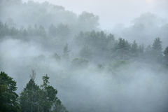 Δάσος σε Sugulda που καλύπτεται Στοκ Φωτογραφίες