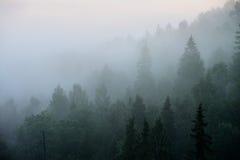 Δάσος σε Sugulda Στοκ Εικόνες