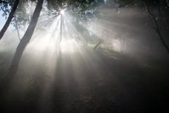 Δάσος σημύδων Στοκ φωτογραφία με δικαίωμα ελεύθερης χρήσης