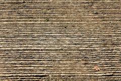 δάσος σιταριού Στοκ Εικόνες