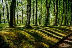Δάσος, σκιές των δέντρων στο ηλιοβασίλεμα στοκ εικόνες