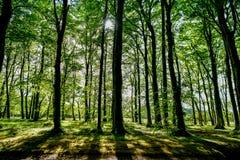 Δάσος, σκιές των δέντρων στο ηλιοβασίλεμα στοκ φωτογραφία
