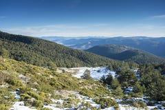 Δάσος σκωτσέζικων πεύκων Guadarrama στο εθνικό πάρκο βουνών Στοκ Φωτογραφίες