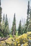 Δάσος στα βουνά στην ομίχλη Στοκ εικόνα με δικαίωμα ελεύθερης χρήσης