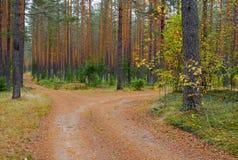 Δάσος στα κόκκινα και πορτοκαλιά χρώματα Στοκ Εικόνες