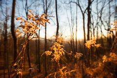 Δάσος στα μπλε βουνά κορυφογραμμών στοκ εικόνα με δικαίωμα ελεύθερης χρήσης