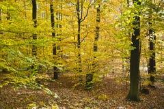 Δάσος στα όμορφα χρώματα φθινοπώρου μια ηλιόλουστη ημέρα Στοκ φωτογραφία με δικαίωμα ελεύθερης χρήσης