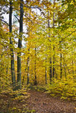 Δάσος στα όμορφα χρώματα φθινοπώρου μια ηλιόλουστη ημέρα Στοκ εικόνα με δικαίωμα ελεύθερης χρήσης