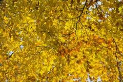 Δάσος στα όμορφα χρώματα φθινοπώρου μια ηλιόλουστη ημέρα Στοκ Φωτογραφίες