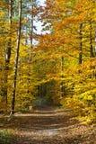 Δάσος στα όμορφα χρώματα φθινοπώρου μια ηλιόλουστη ημέρα στοκ φωτογραφία