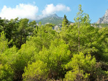 Δάσος στα Taurus βουνά στην Τουρκία Στοκ Εικόνες