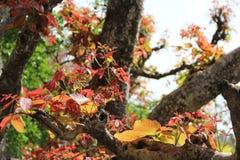 Δάσος στην Ινδία Στοκ Φωτογραφίες