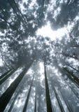 Δάσος στην ομίχλη Στοκ φωτογραφία με δικαίωμα ελεύθερης χρήσης