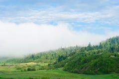 Δάσος στην ομίχλη Γιγαντιαίο σύννεφο Carpathians, Ουκρανία Στοκ φωτογραφίες με δικαίωμα ελεύθερης χρήσης