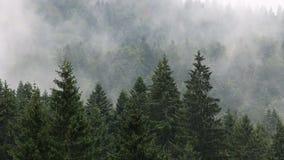 Δάσος στην ομίχλη απόθεμα βίντεο